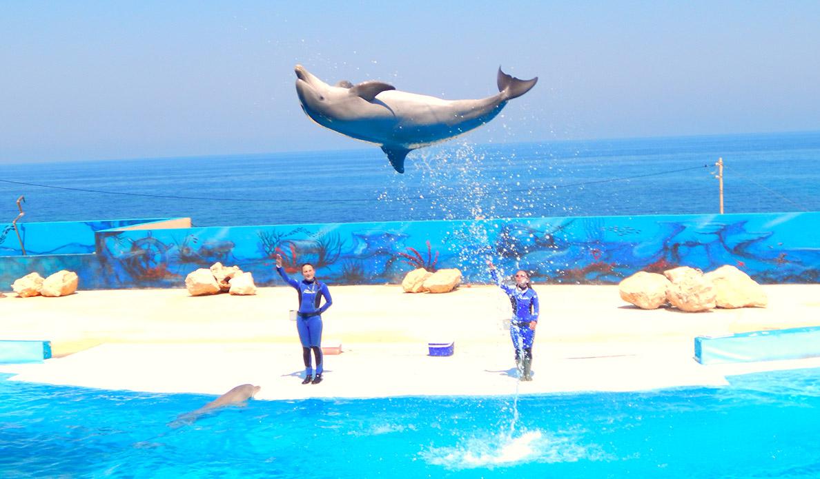Dolphins in Malta - 1188 - 695 - ERI 4