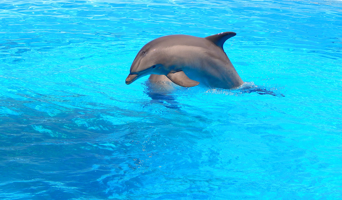 Dolphins in Malta - 1188 - 695 - ERI