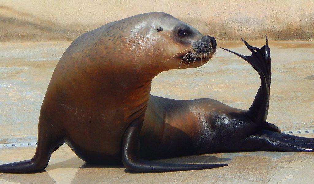 Galleria di foto - Bagno coi delfini ...