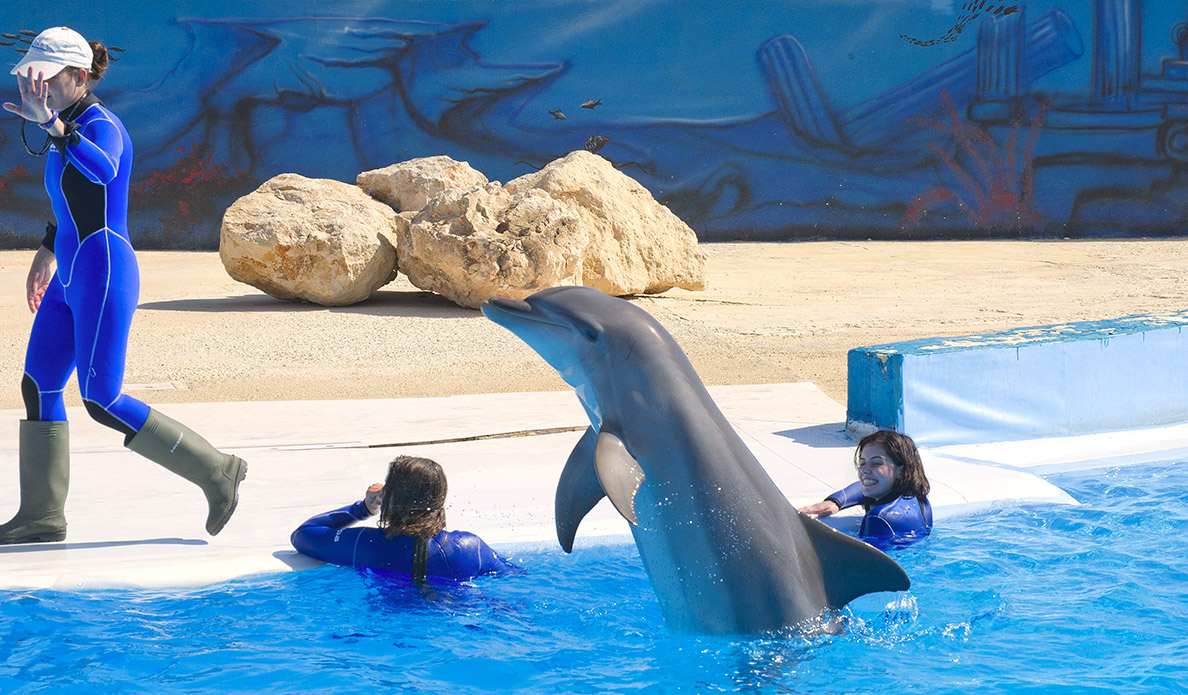 swim with dolphins in malta malta marine park