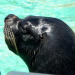 Sea Lion Interaction Programmes