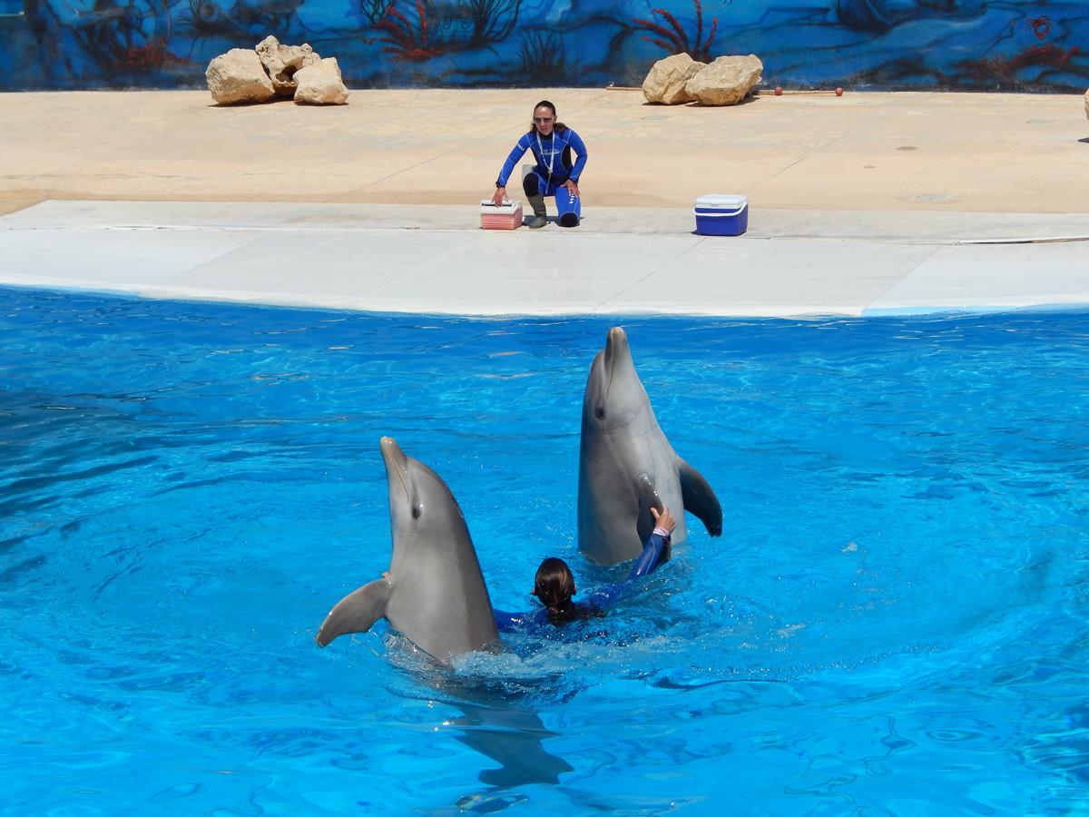 malta marine park swim with dolphins malta