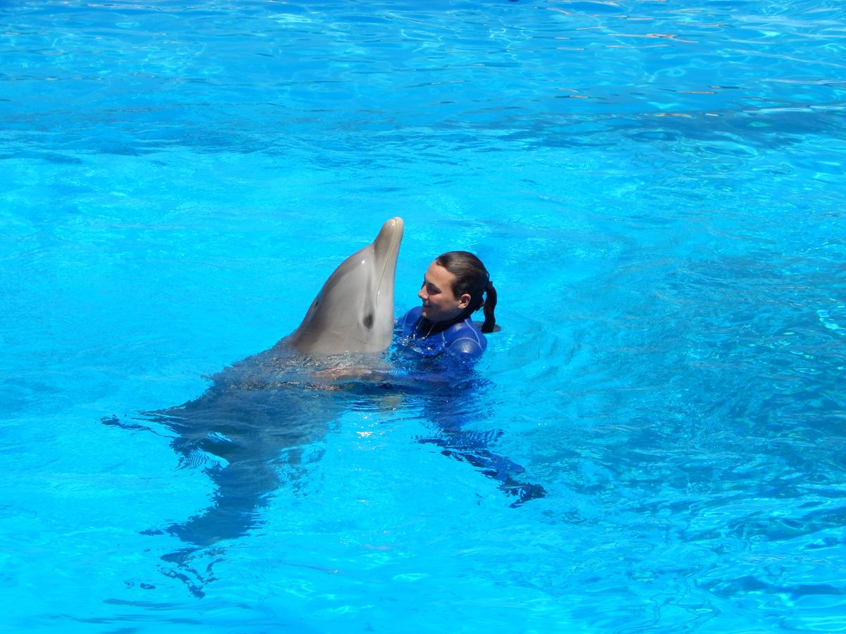 Malta e delfini - Agenzia immobiliare a malta ...