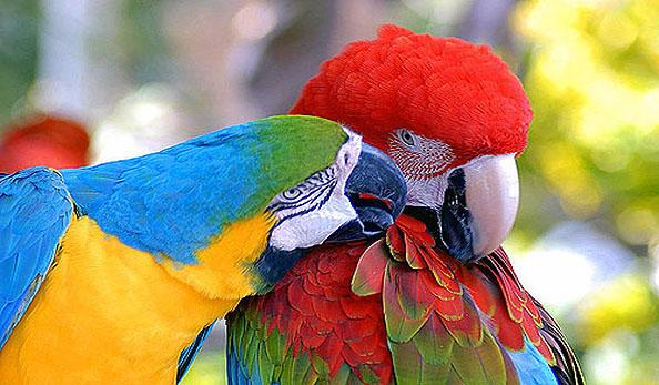 Spettacoli degli pappagalli - Bagno coi delfini roma ...