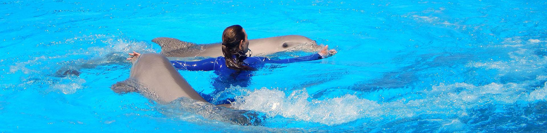 Marine Park Malta Dolphins