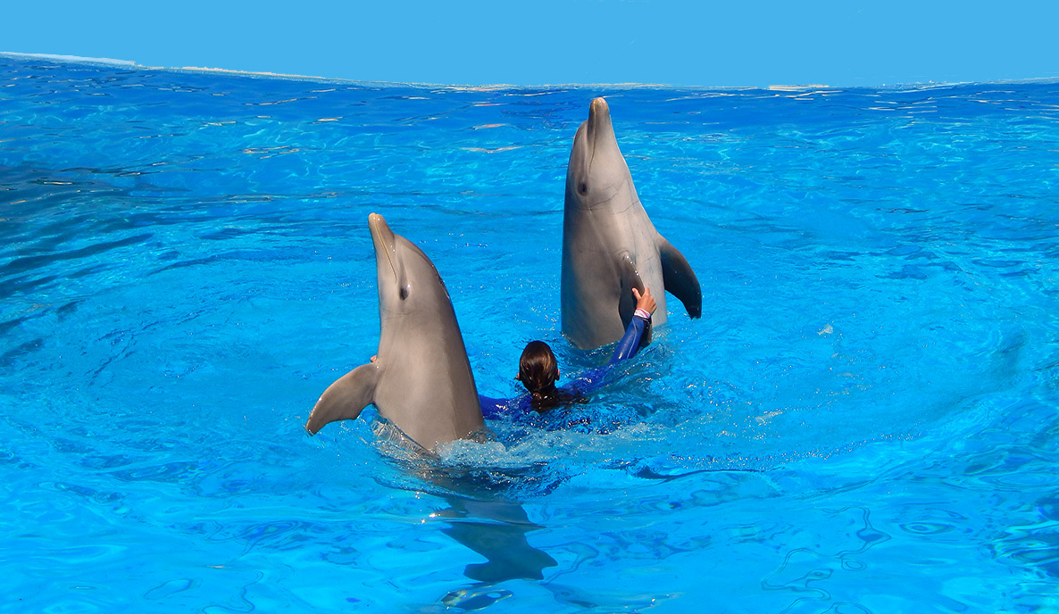 Swim With Dolphins in Malta