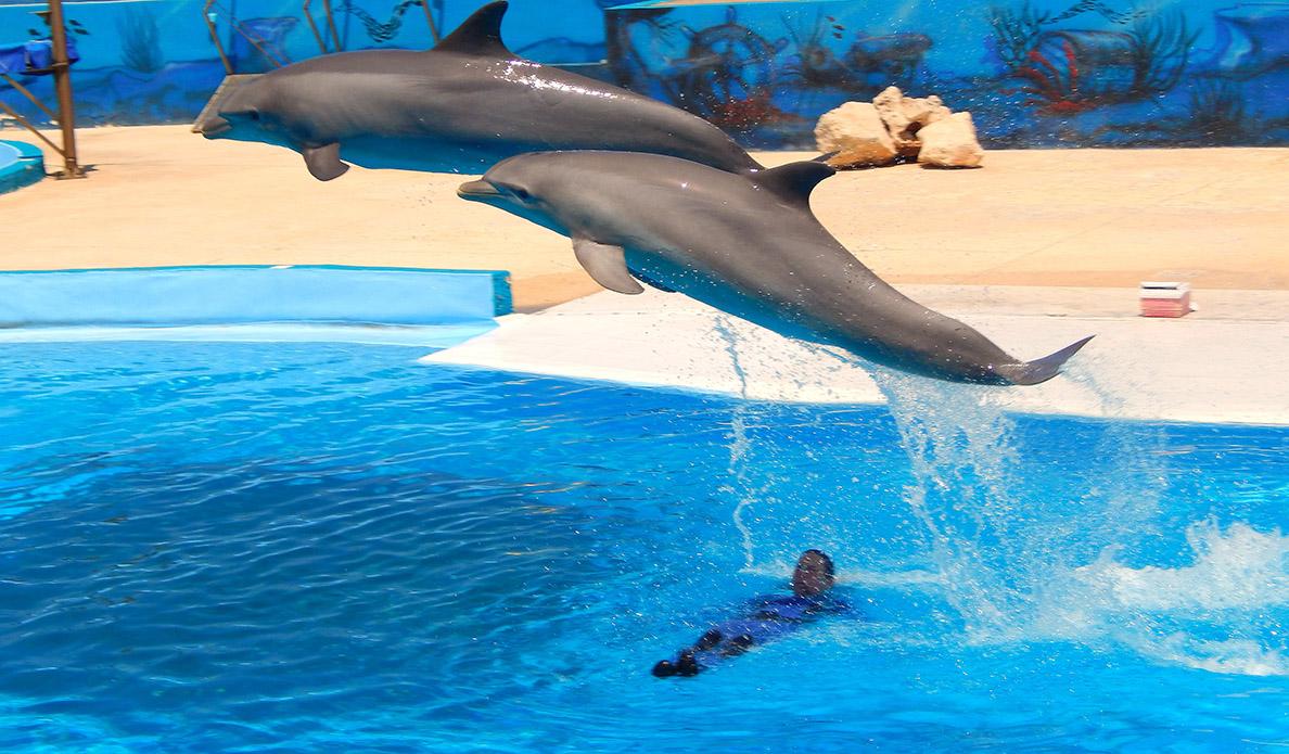 Dolphins in Malta - 1188 - 695 - ERI 3