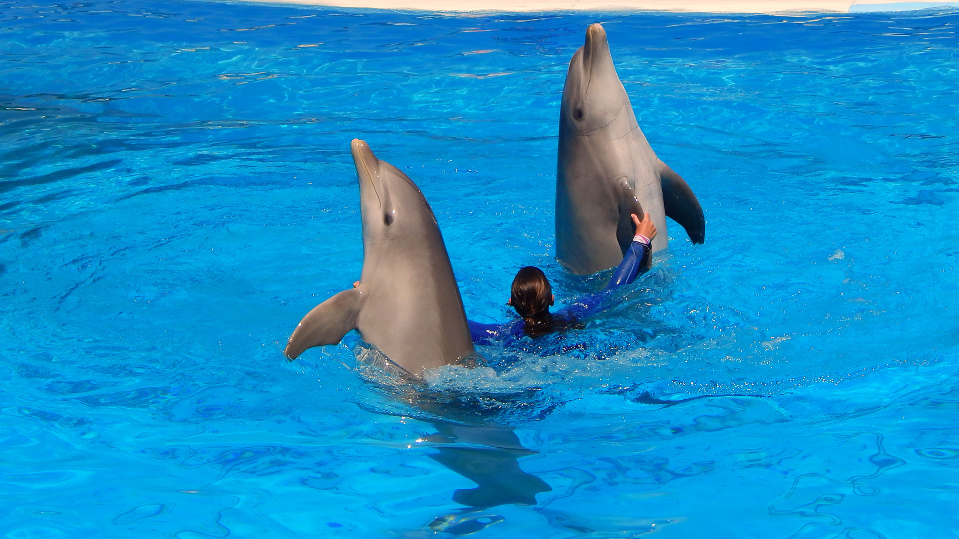 Swim with dolphins at the marine park in Malta