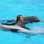 Dolphin Shows In Malta