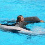 Dolphin Shows In Malta